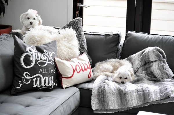 Charlie and Julius, the shih poo fur babies of blogger Lisa Tufano